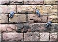 SK5739 : Canal pigeons : Week 22