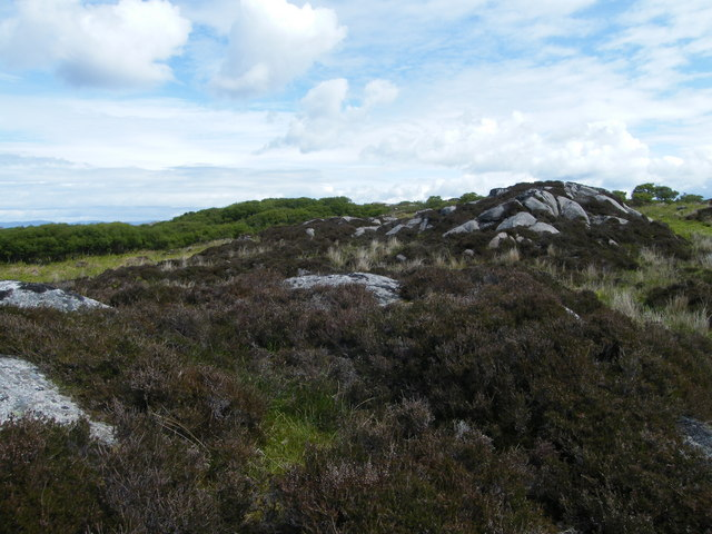 South edge of the trees at Coille a Ghonaidh