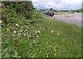 SW9159 : Orchids, Halloon by Derek Harper