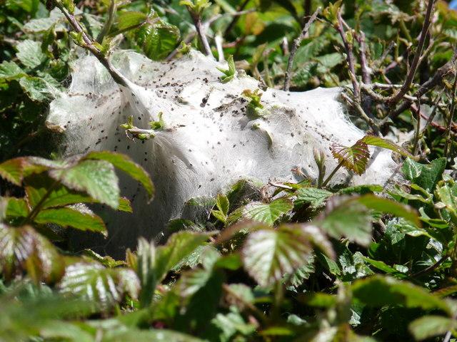 A Spiders Nest in a lane near Roadway Corner
