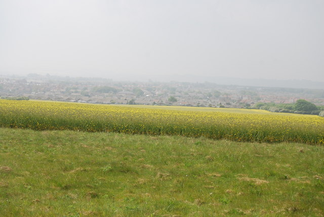Oil Seed Rape by the Cleveland Way