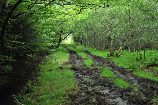 Muddy track through Cairntawie Wood