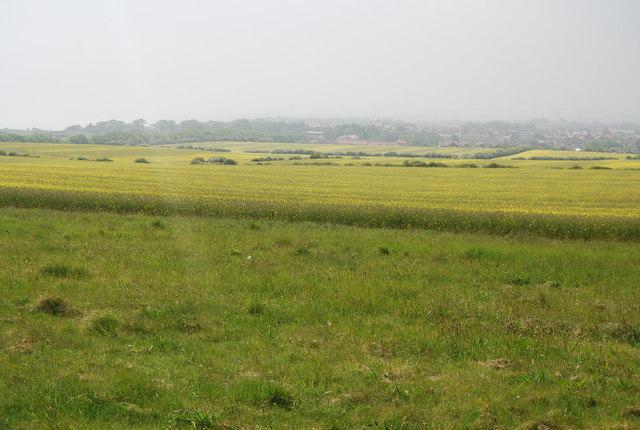Headland strip to a rape crop