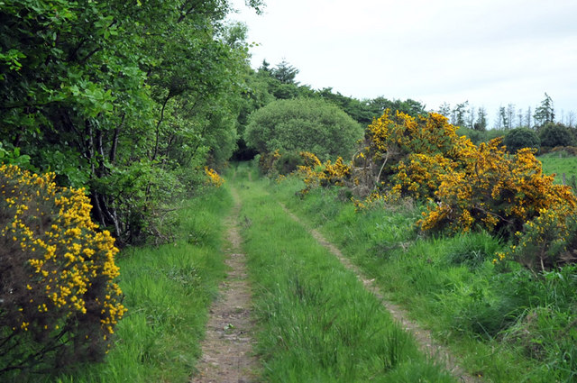 Track past Cairntawie Wood