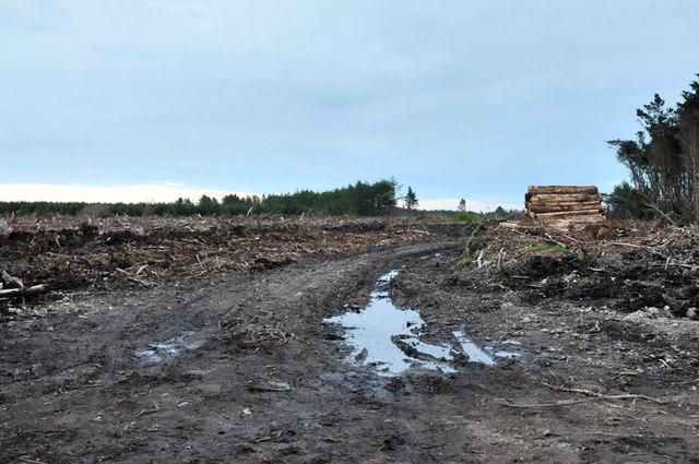 Forestry clear fell near Crimond