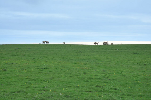 Cows on the horizon at South Crimongorth