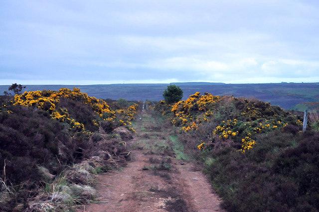 Moorland track to Kinbeam Hill