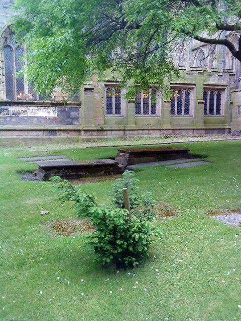 Millennium Yew, St. Mary's, Nottingham