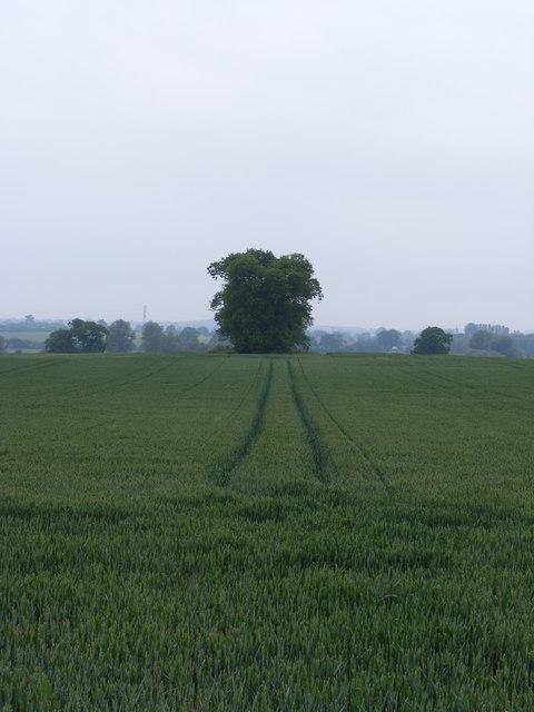 Field looking towards Hardley Flood