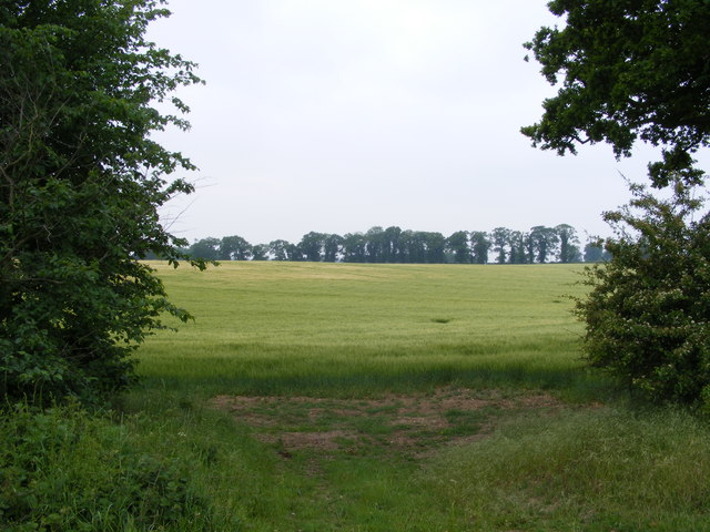 View from the corner of the wood