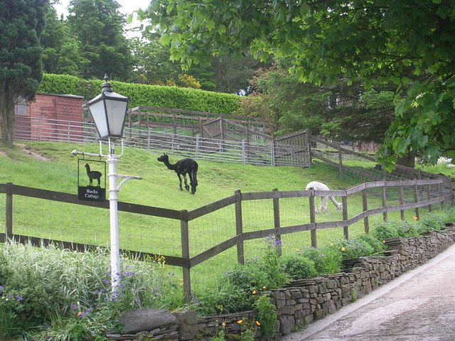 Llamas grazing in the grounds of Rocks Cottage! - Union Lane