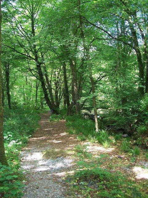 Riverside path towards Llanystumdwy