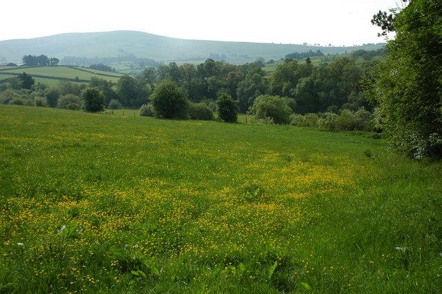 Grassland near Allt-goch