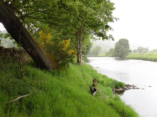 The River Tweed at Rampy Haugh