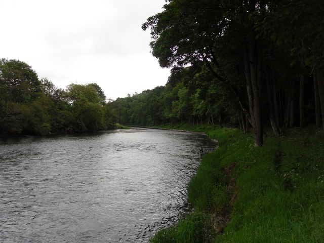 Looking Southeast down the River Tweed at Rampy Haugh Wood