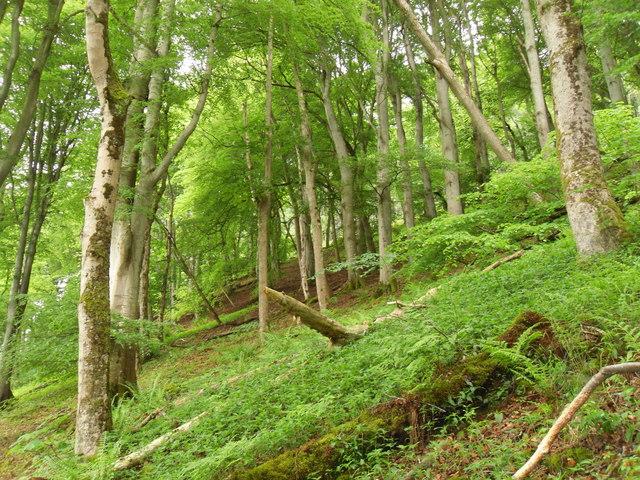 Plora Wood