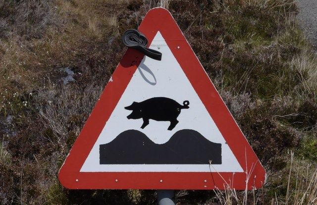 Warning sign on Calum's Road, Raasay