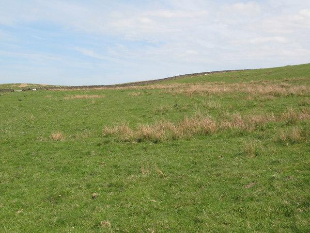 Pastures east of Penpeugh