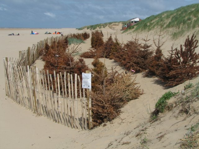 Sand Dune Restoration