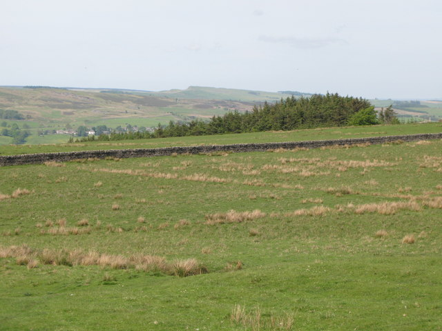Pastures and woodland east of Penpeugh