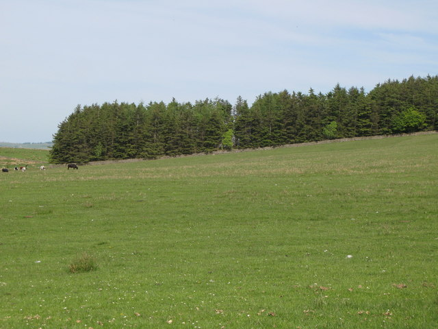 Pastures and woodland east of Allensgreen