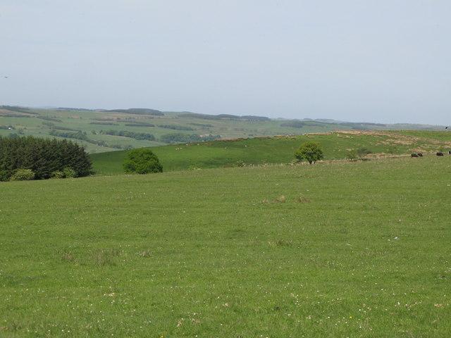 Pastures east of Allensgreen