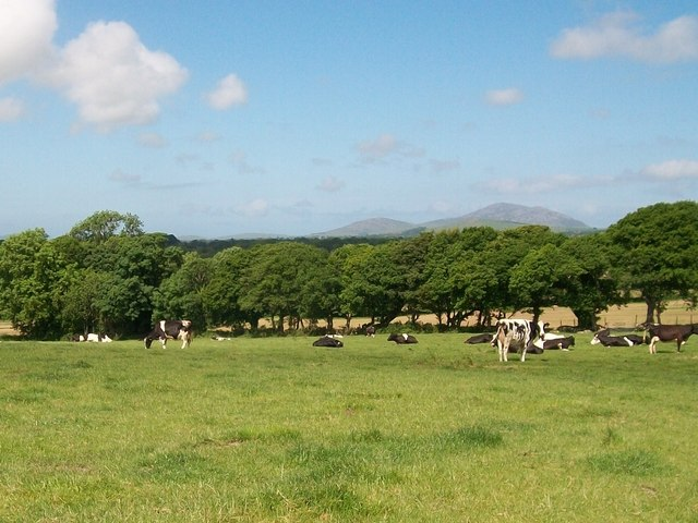 View across a shelter belt towards the Eifl Hills
