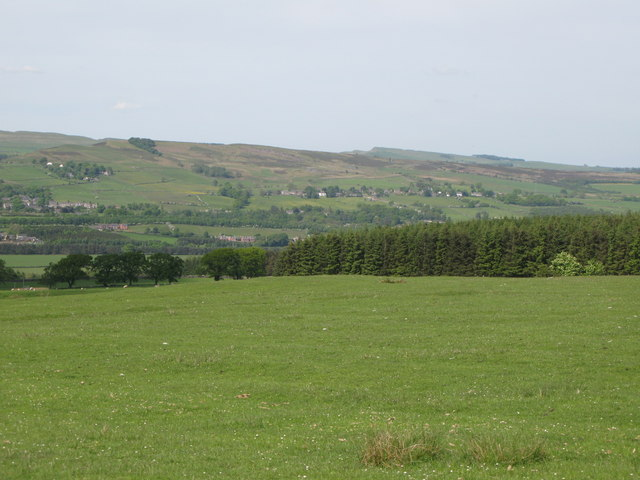 Pastures and woodland east of Allensgreen (2)