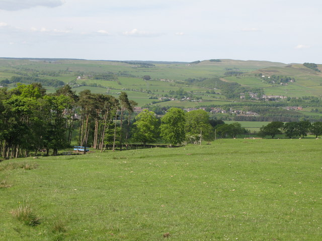 Pastures and woodland east of Allensgreen (3)