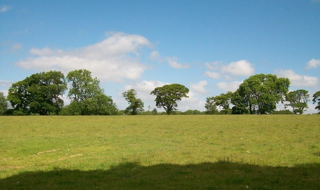 A row of trees viewed across pasture land from near Cefn-y-maen