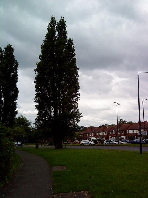 Large trees on University Boulevard