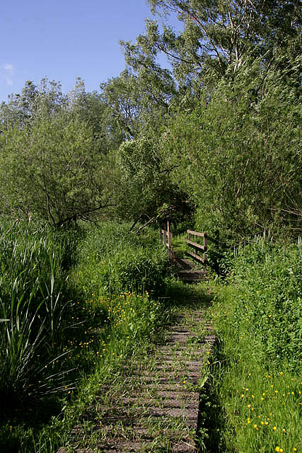 A board-walk at Yetholm Loch Nature Reserve