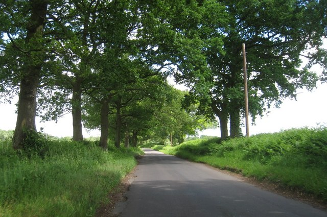 A lane in Hampshire