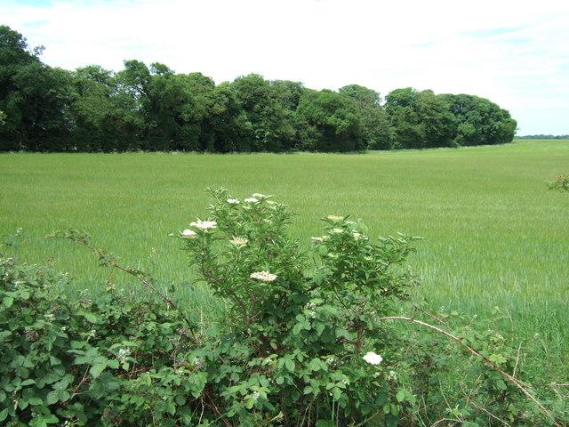 Damerood Belt, north west Norfolk