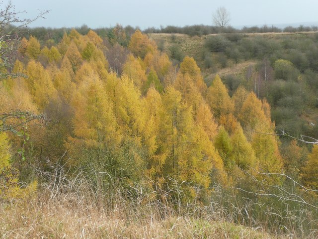 Autumn colours in the Fauld Crater, Hanbury