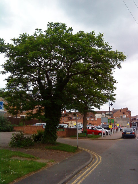 Trees on City Road, Beeston