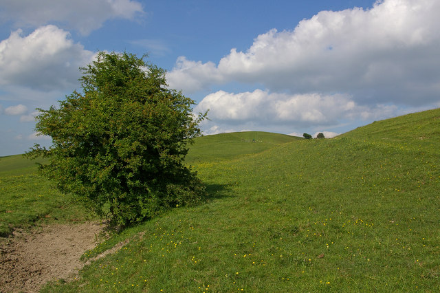 On the slopes of Knap Hill