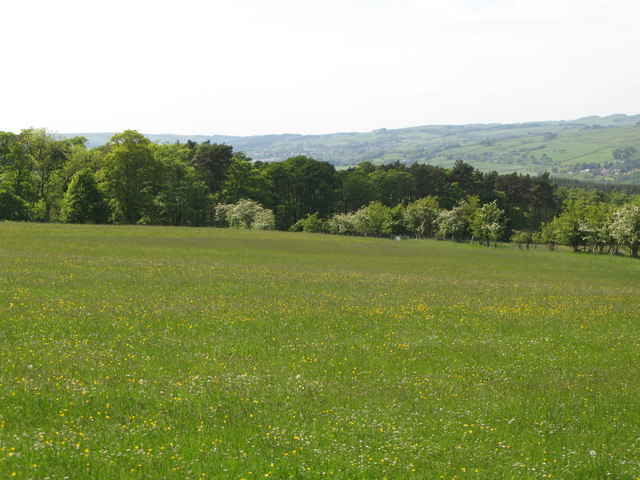Pastures and woodland east of Allensgreen (6)