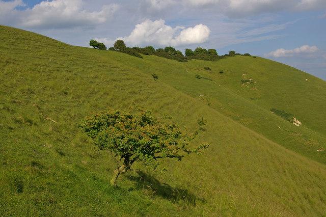 Pewsey Downs scarp slope