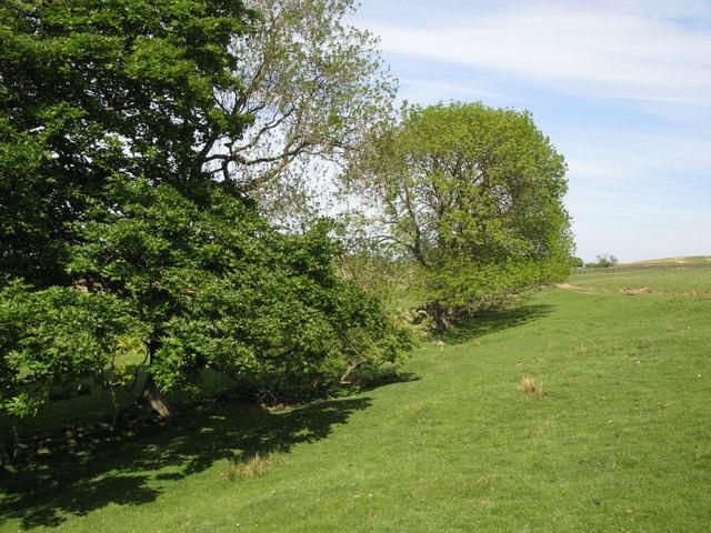 Old field boundary east of penpeugh