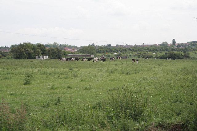 Fields on Far Ings