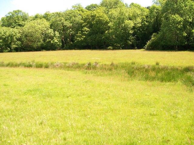 Meadow above Afon Dwyfach at Tyddyn Crythor