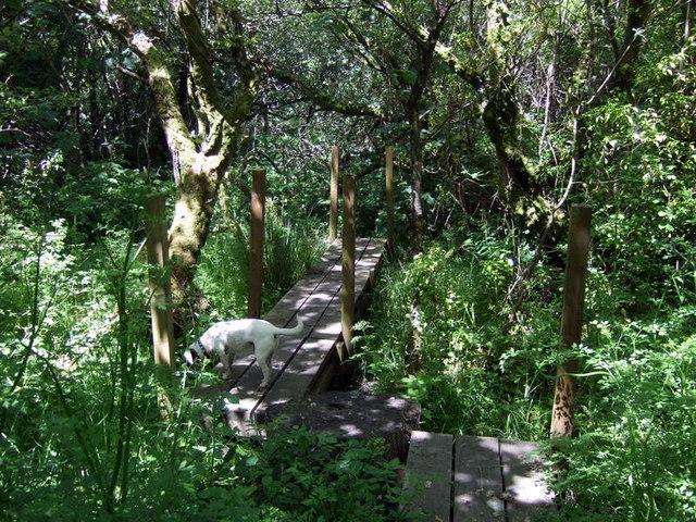 Woodland near Buckette