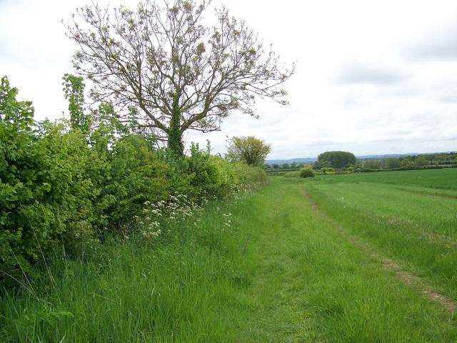 Arable field near Somerton