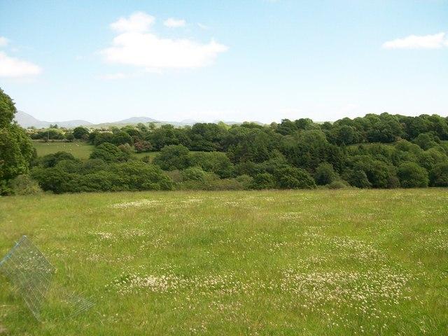 A natural meadow overlooking Afon Dwyfach
