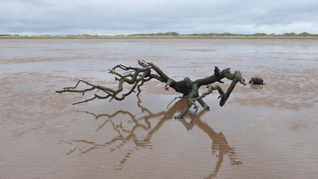 Driftwood in the Danger Area