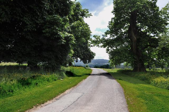 Drive between trees at Dinefwr Park - Llandeilo