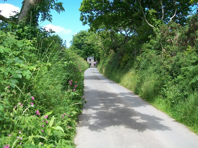 Roadside vegetation on the Gwynfryn Road