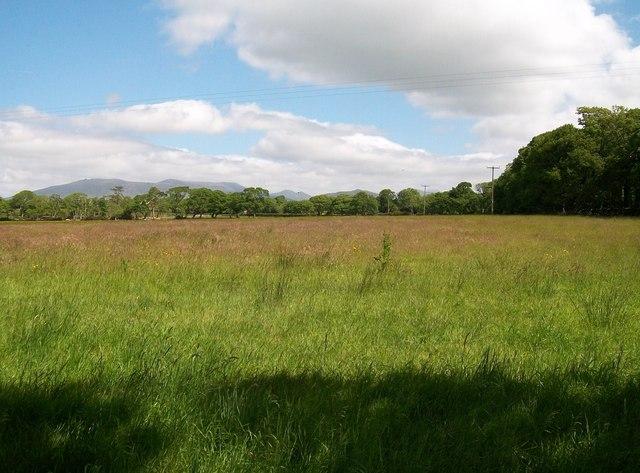 View eastwards across pasture land near Gwynfryn Farm