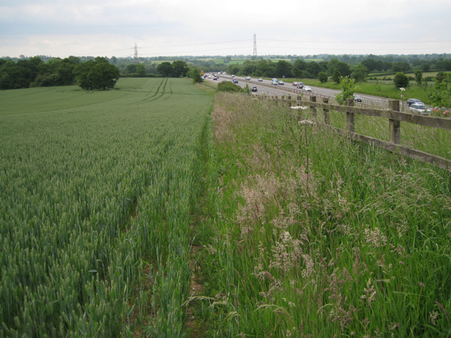 Wheatfield by the M40
